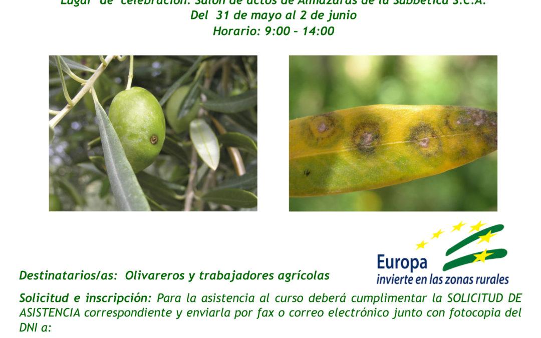 Curso de gestión integrada de plagas en el olivar 1