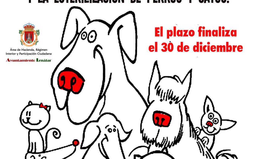 El Ayuntamiento de Iznájar subvencionará el implante de chips y la esterilización de perros y gatos 1