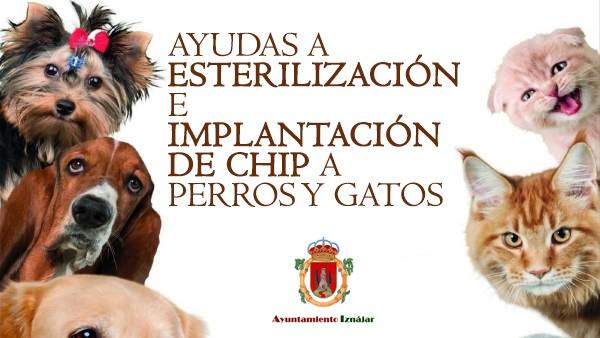 Ayudas para la esterilización y la implantación de chips en perros y gatos 1